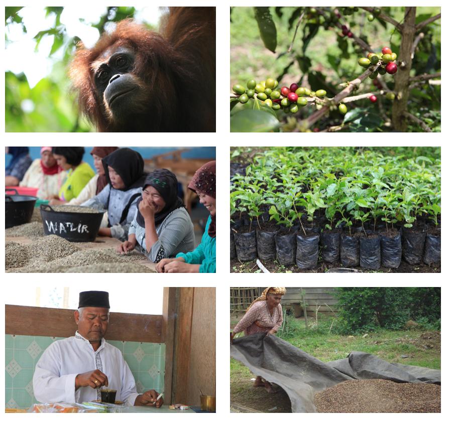 Orang-Utan-Schutz-Indonesia-Sumatra-Kaffee-Projekt-4