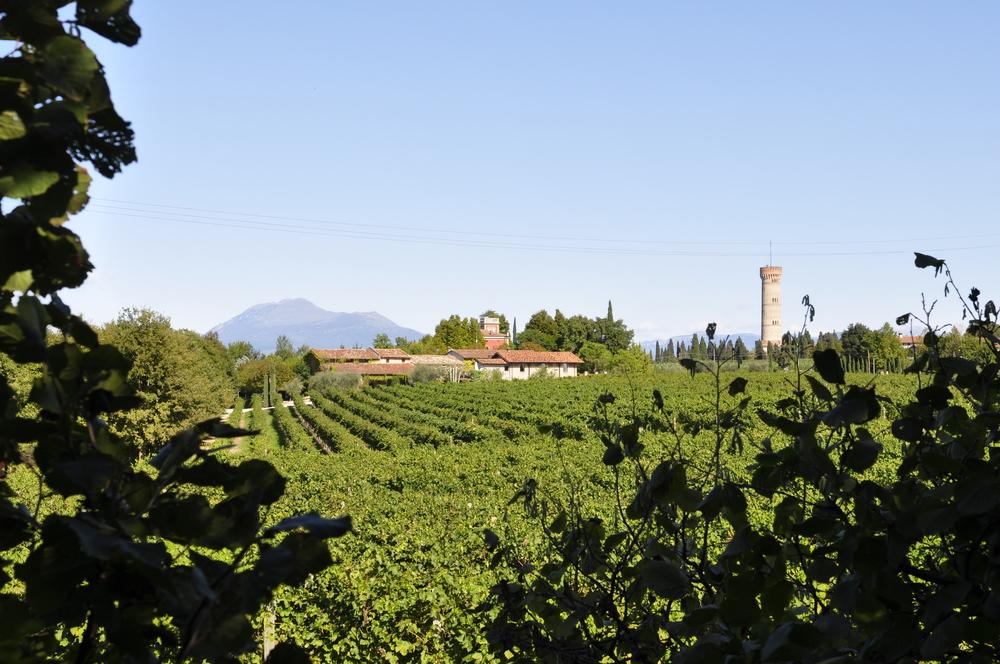 Weingut-Selva-Capuzza-Emotionen-Gardasee-Lombardei-Weisswein