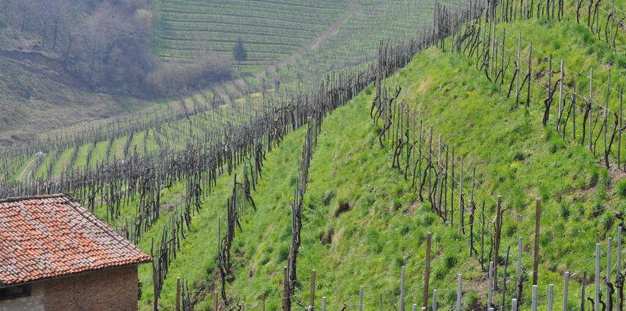 Weinregion-Colosel-Valdobiadene