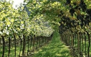 Weingut La Vigne Marco Spagnolli