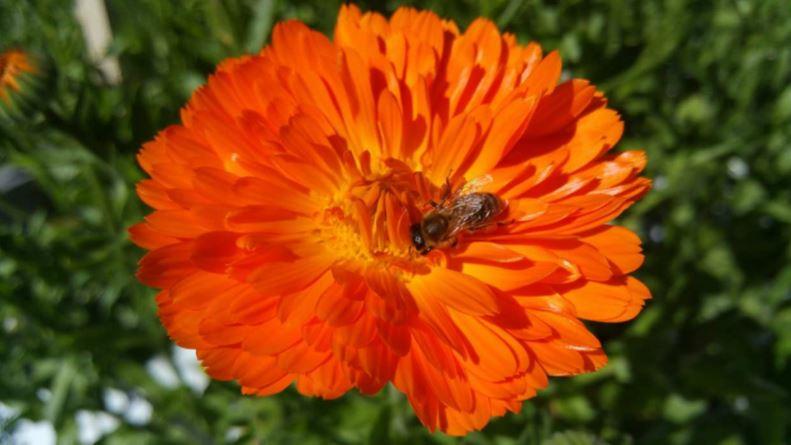 Blume-Kr-uter