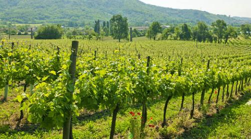 Weinberg-Kellerei-Weingut-Lantieri-Franciacorta-Schaumwein-Italien