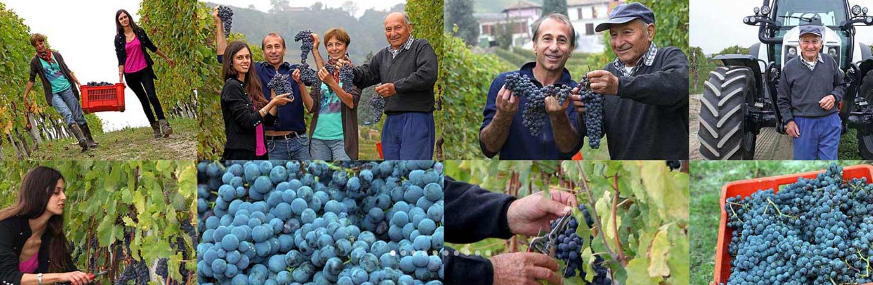 Weingut-Paolo-Conterno-Arbeit-am-Weinberg