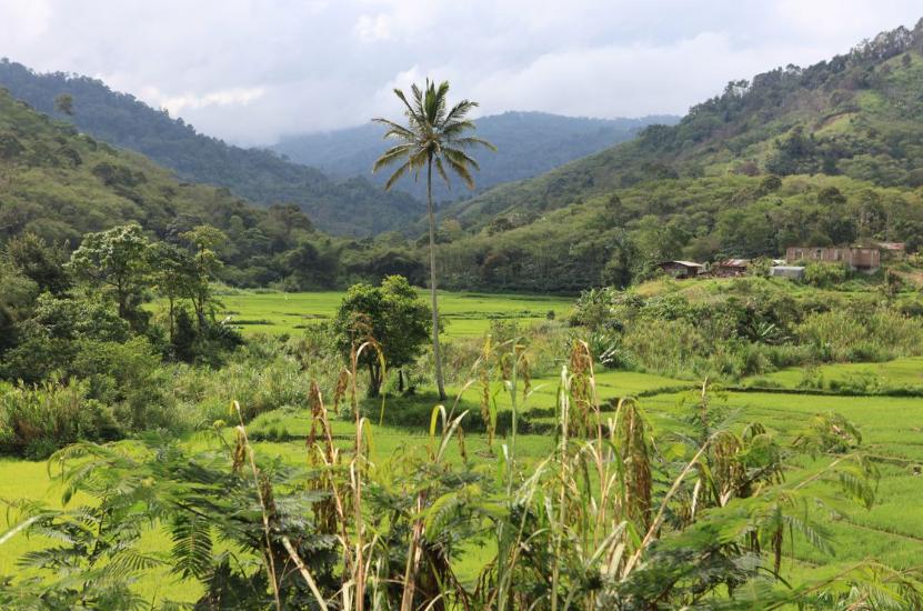 Orang-Utan-Schutz-Indonesia-Sumatra-Kaffee-Projekt-2