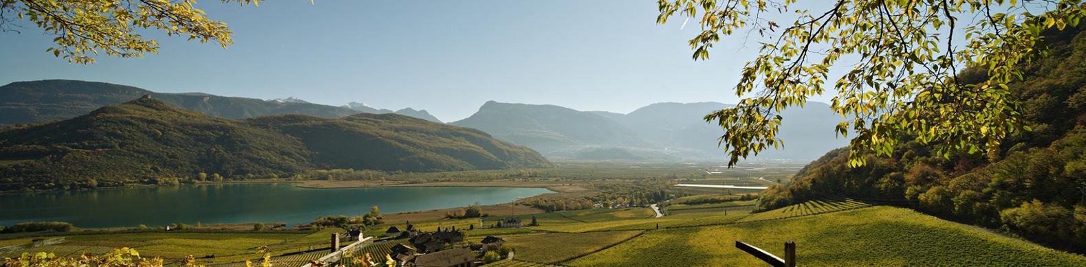 Landschaft-auf-die-Weinreben591d54124732f