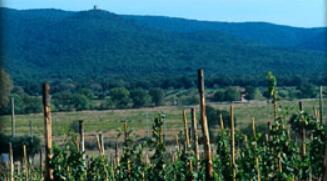 WEingut-Valdifalco-Toskana