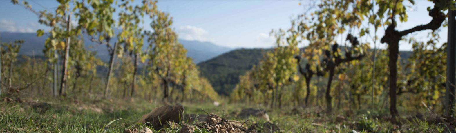 rebst-cke-toskana-montalcino